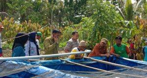 PANEN LELE - Wakil Bupati, Gusli Topan Sabara saat meninjau lele jenis sangkurian yang siap dipanen di Demplot Budidaya Ikan DKP Konawe di Desa Anggohu, Kecamatan Tongauna Utara.
