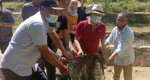 Wakil Bupati Konawe, Gusli Topan Sabara saat memanen ikan demplot hasil program seribu kolam ikan.