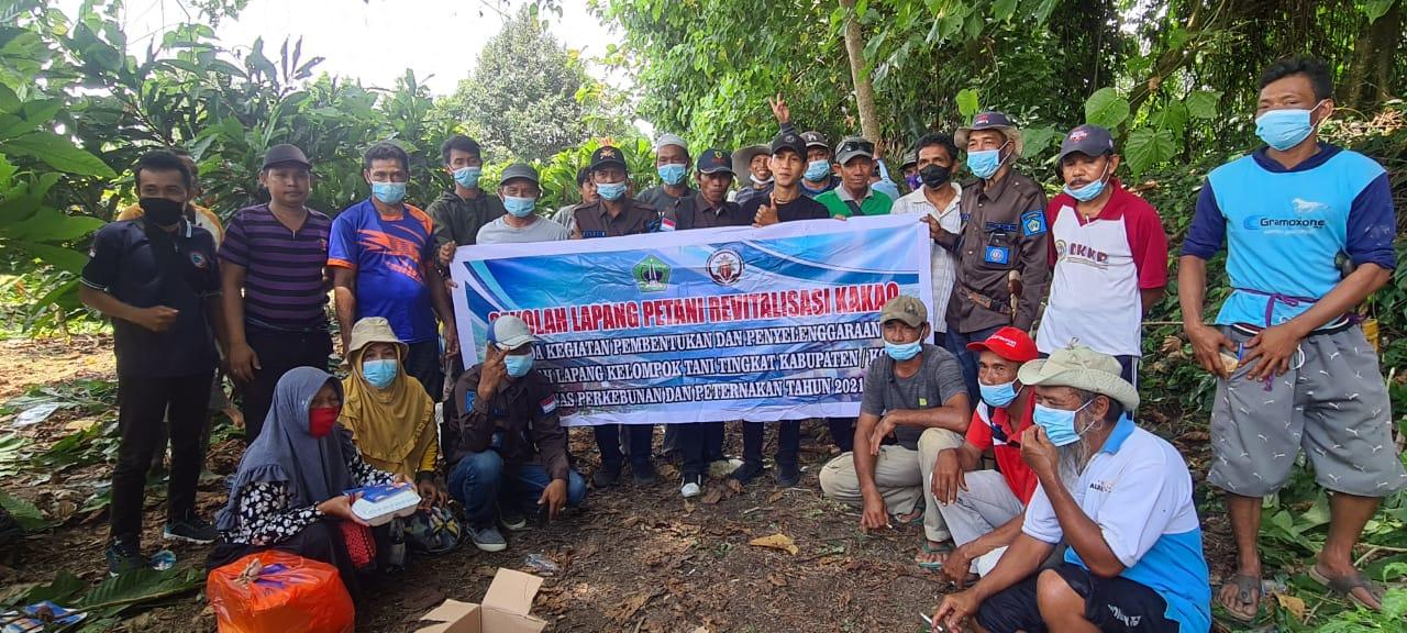 Sekolah Lapang (SL) Dinas Perkebunan dan Peternakan Kabupaten Kolaka Utara (Kolut).